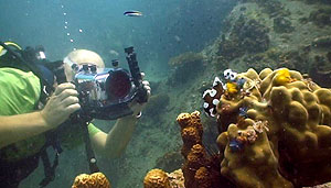 underwater-video-course-kohtao